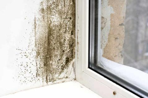 Mchenry IL Mold Remediation