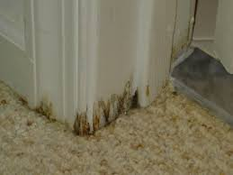 Mold Remediators Coral Illinois